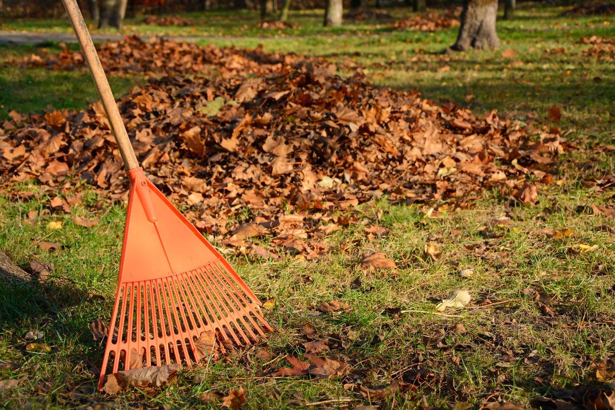 leaf-raking